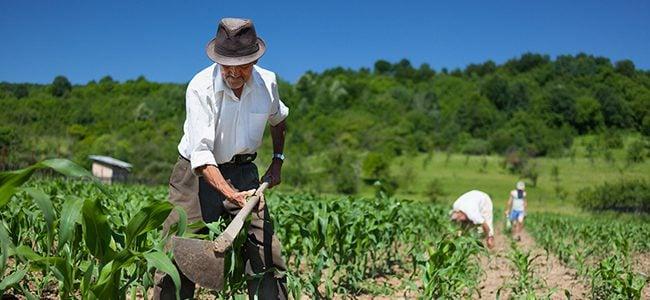 Cayó índice de precios del mercado agropecuario en abril