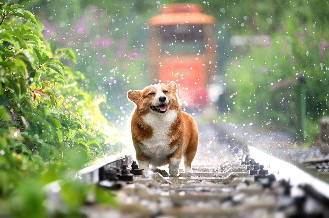 Mascotas, seguros para mascotas, perro (Foto Pixabay)