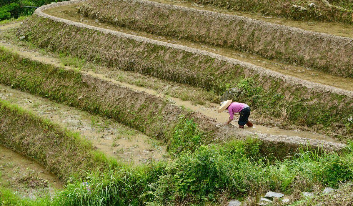 China da por erradicada la pobreza extrema y proyecta revitalización rural